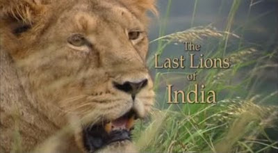 The Last Lion of India by BBC