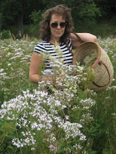 Picking Meadowsweet