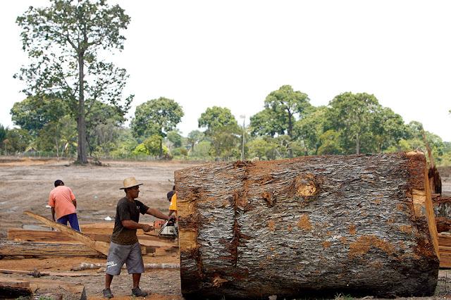 Resultado de imagem para desmatamento pimenta bueno