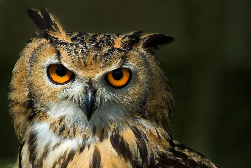 Black Book Trade In >> The Pride - Shubhashish Banerjee: Harry Potters Owl or Its ...