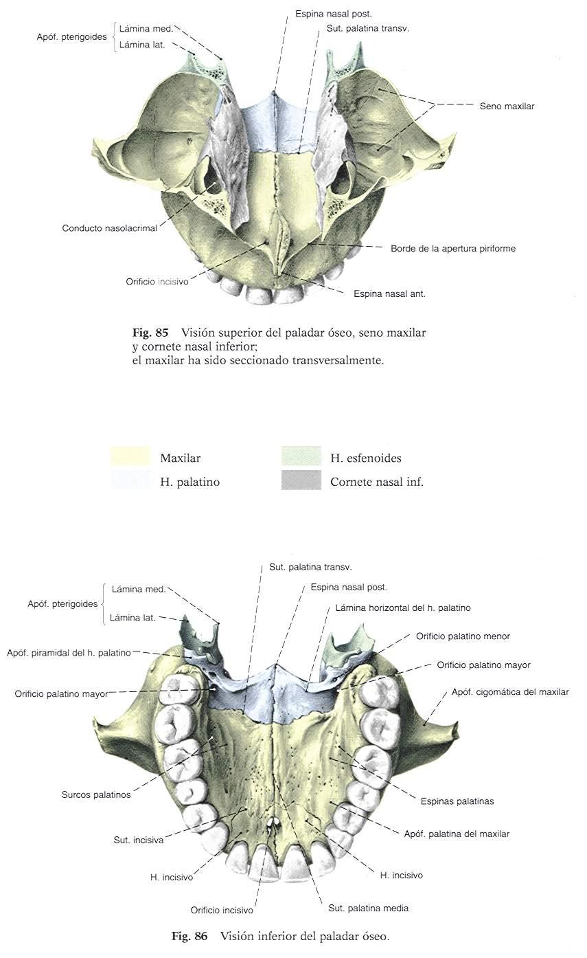 CFP-Ricardo Rojas - MORON Tecnico de Laboratorio para Odontologo ...