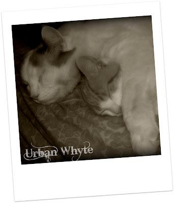 Urban Whyte