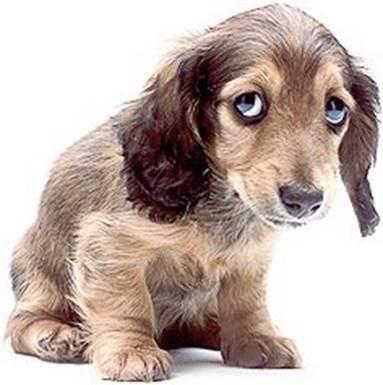 Beth's Thoughts: Sad Dog  Sad
