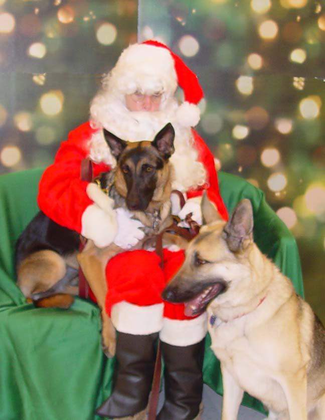 Va Dog Rescue: December 2010