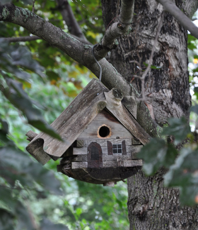 Birdhouse Garden: Three Dogs In A Garden: Great Fall Color In A Country