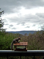 squirrel on rail