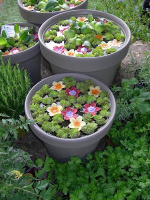Minis Bassins Plantes Et Fleuris Paris Cote Jardin