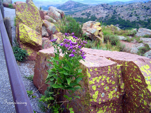 View of Wildflowers and rocks near Lawton, Ok on Mt. Scott