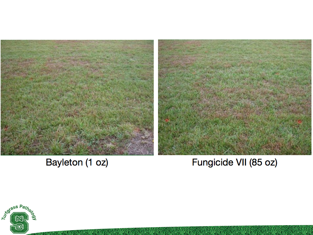 Turfgrass disease updates for golf courses: New Granular