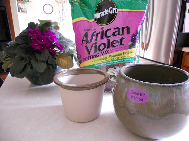 Use African violet soil
