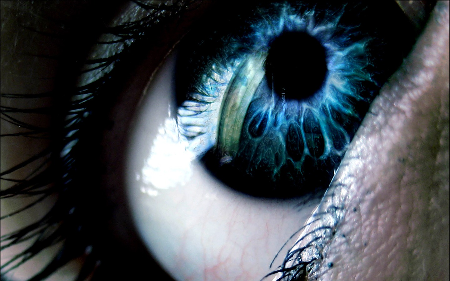 Black light reactive contact lenses | Zombie Apocalypse ...