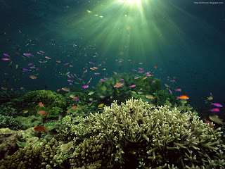 underwater colorful pictures