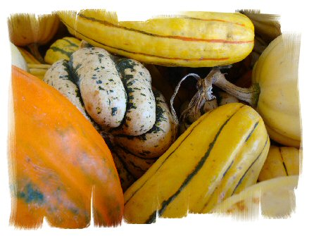 ornamental gourds photo image