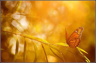 Resultado de imagen para mariposa perdida