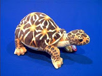 desert turtle plush stuffed animal toy