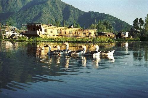 Kashmir Mini Switzerland Vacation In Kashmir Houseboats