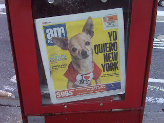 Rescue Chihuahua featured on cover of AM New York newspaper, NYC