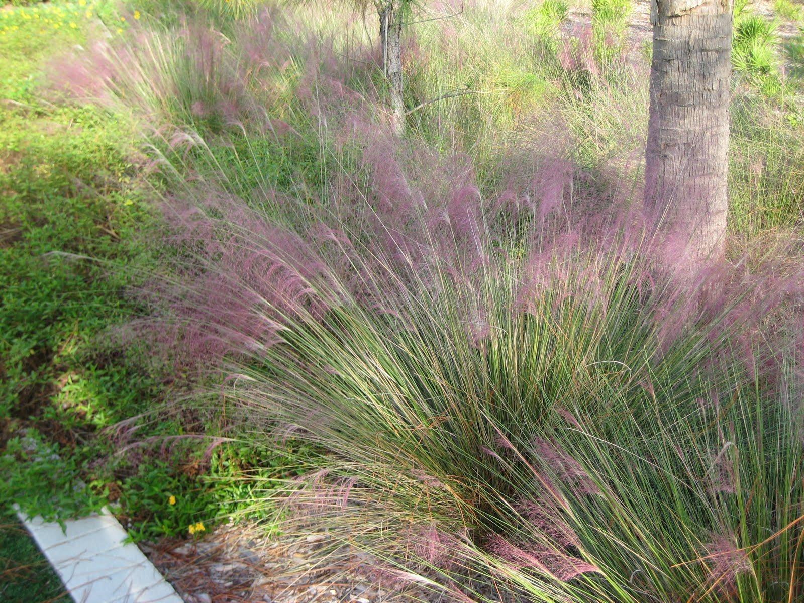18 modern grasses for landscaping ideas landscape ideas for Modern ornamental grasses
