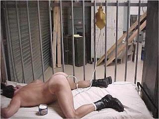 Tranny sex cams