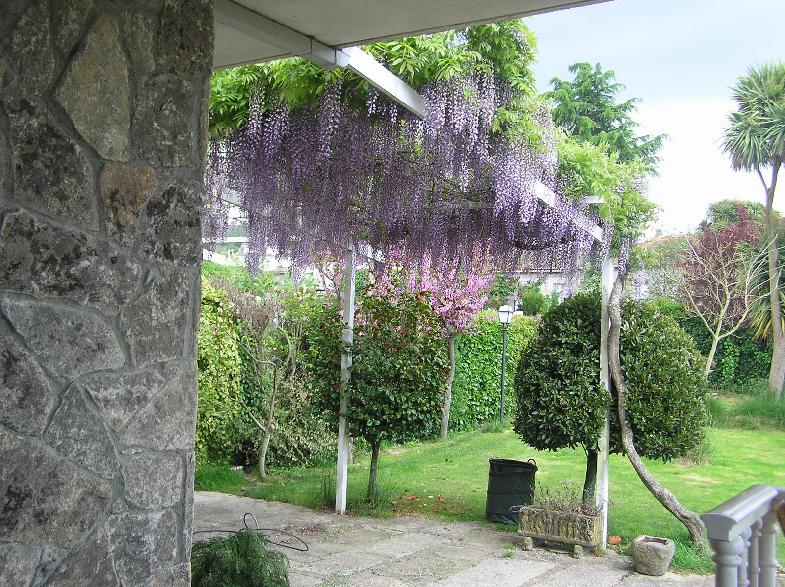 Terrasas y jardines para casas enredaderas o trepadoras para cubrir pared en jardin - Plantas trepadoras para pergolas ...