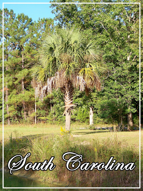 georgetown, south carolina, pond, palm tree