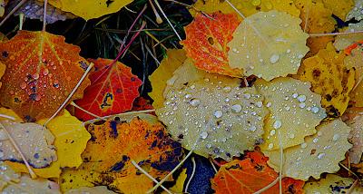 Resultado de imagen para otoño y lluvia