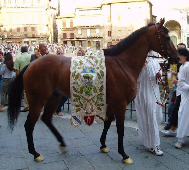 Palio di Siena, cavalo, a cidade medieval