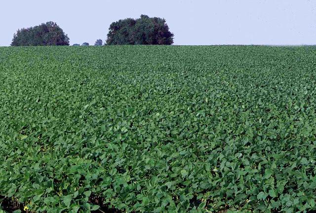 O CO2 é indispensável no ponto de partida da produção alimentar. Sem, ele não só os vegetais, mas os animais e os homens morreriam de fome. E a terra viraria um deserto sem vida.
