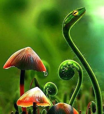 facts around us: Beautifully Photoshopped Combination Of ...