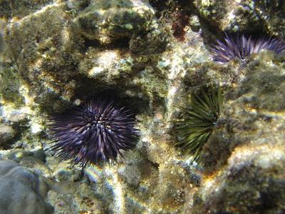 The Echinoblog: Things around the museum-Hawaiian Sea ...