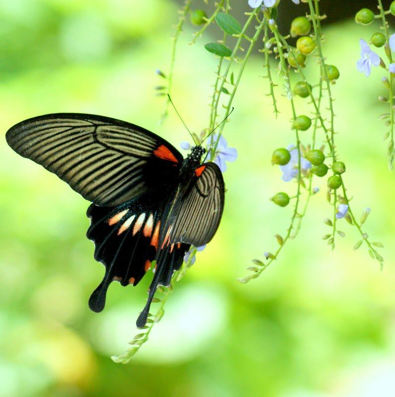 Photographic Wildlife Stories In UK/Hong Kong: Butterflies