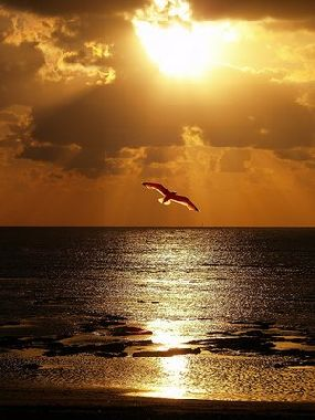 Volando tras los sueños...