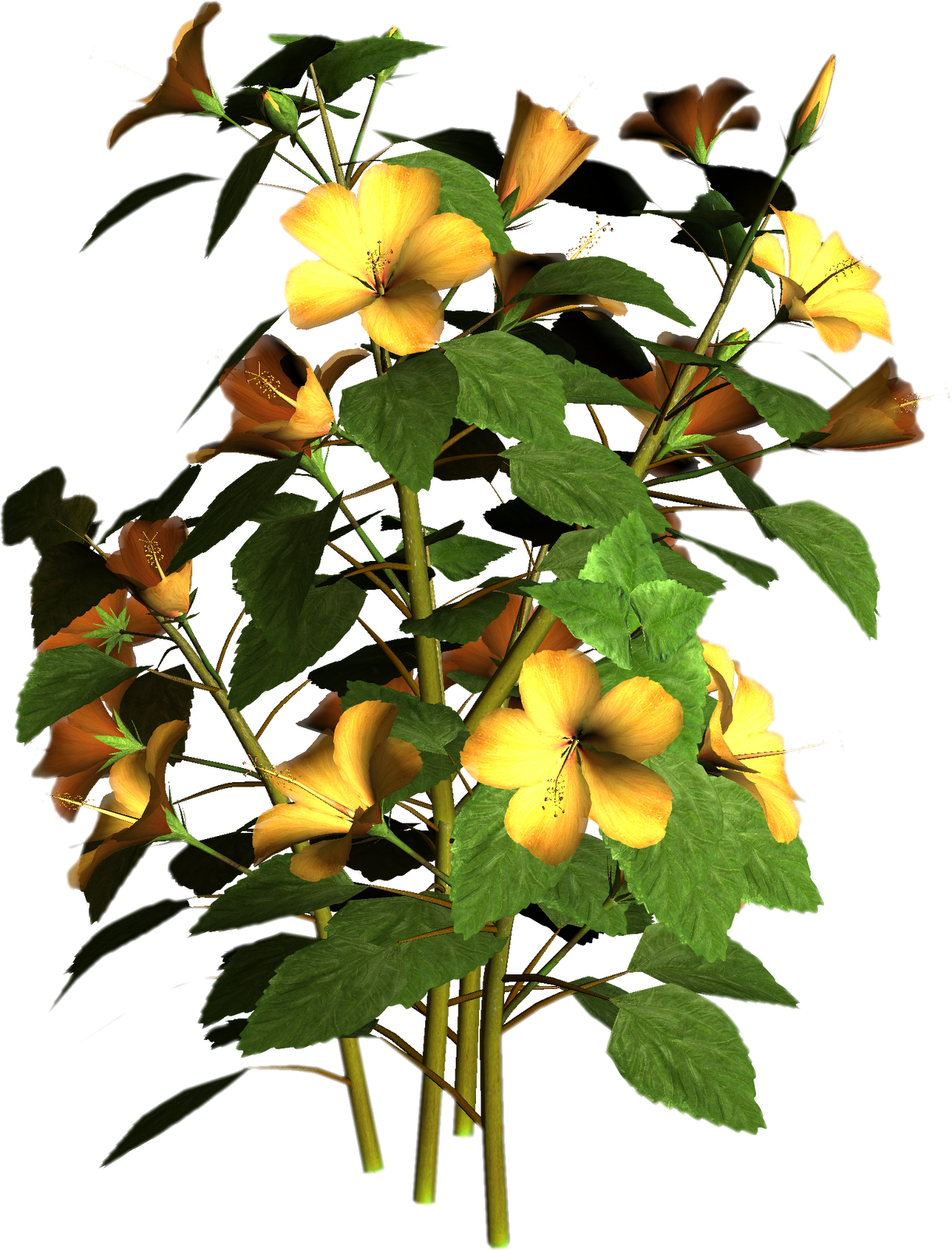 misc plant png