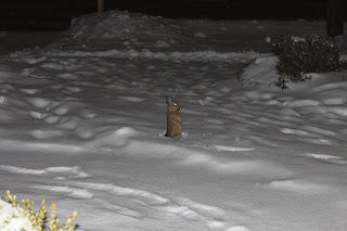 Snowstorm Bunny