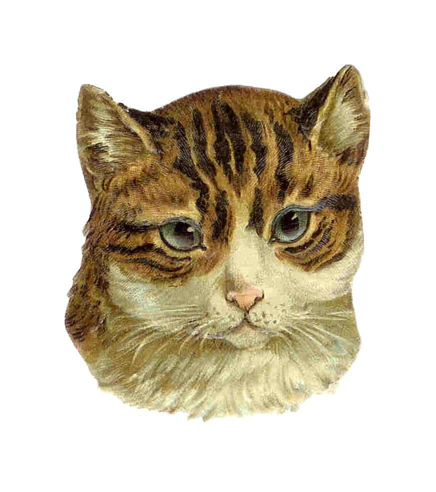 free clip art kittens - photo #42