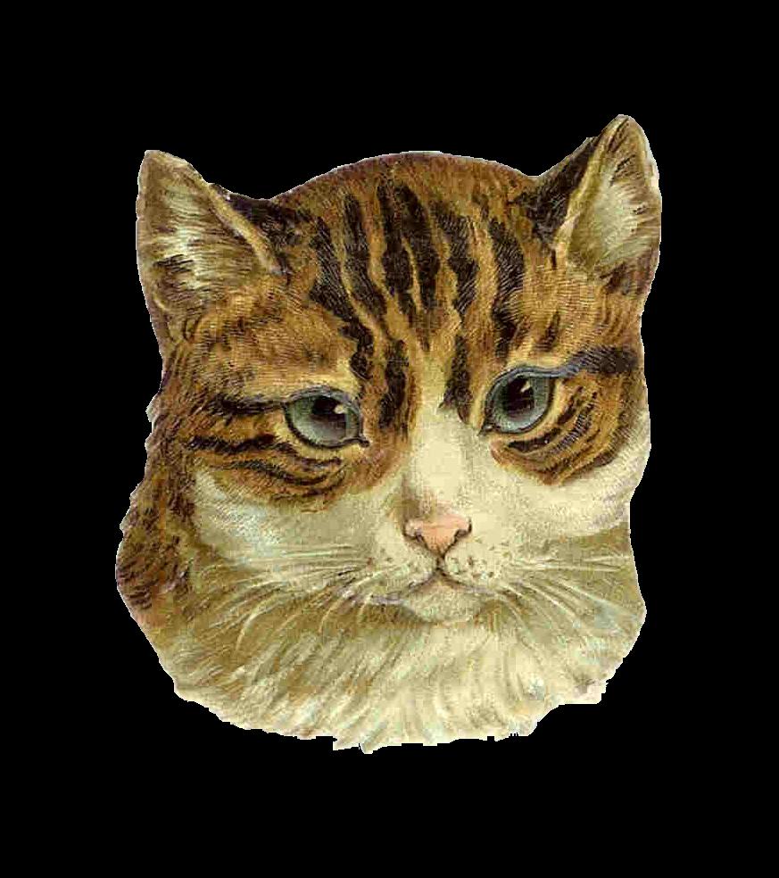 Clipart Cat Images