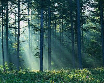 Deciduous Forest In Asia 101