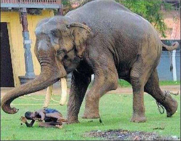 Amusing Pics: elephant-attack