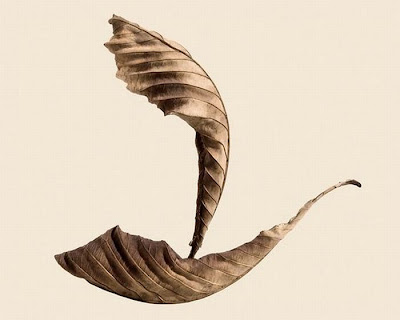 Direct♥Dil♥Se   : Awesome art in dry leaves