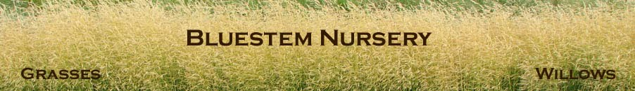 Bluestem Nursery