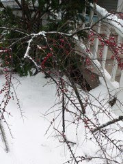 winter branch copyright kerry dexter