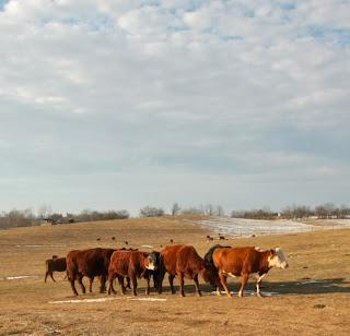 The Farm Stay Project: Smithfield Farm Part II