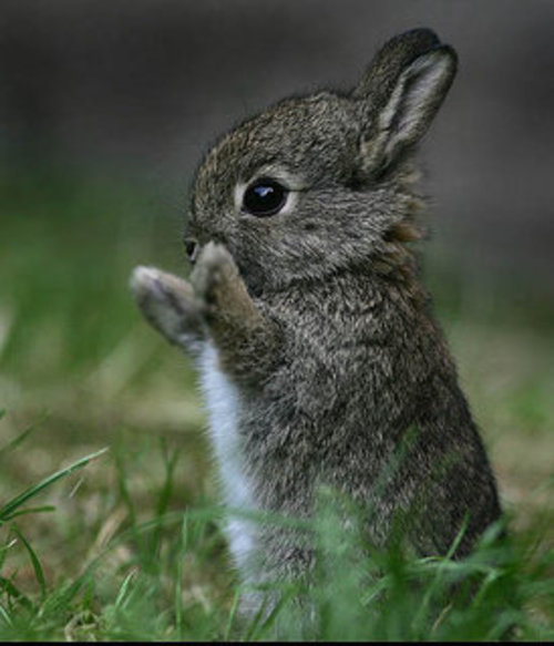 Kat On A Prim Twig: Isn't this the cutest little bunny
