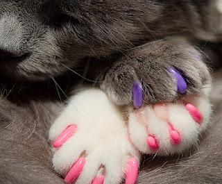 soft paws cat claws
