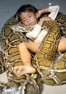 arti mimpi ular dan buaya, arti mimpi ular togel, arti mimpi ular merah, arti mimpi ular mati, arti mimpi ular naga, arti mimpi ular menurut islam, arti mimpi ular cobra, arti mimpi ular hijau, arti mimpi ular masuk rumah, arti mimpi ular besar,