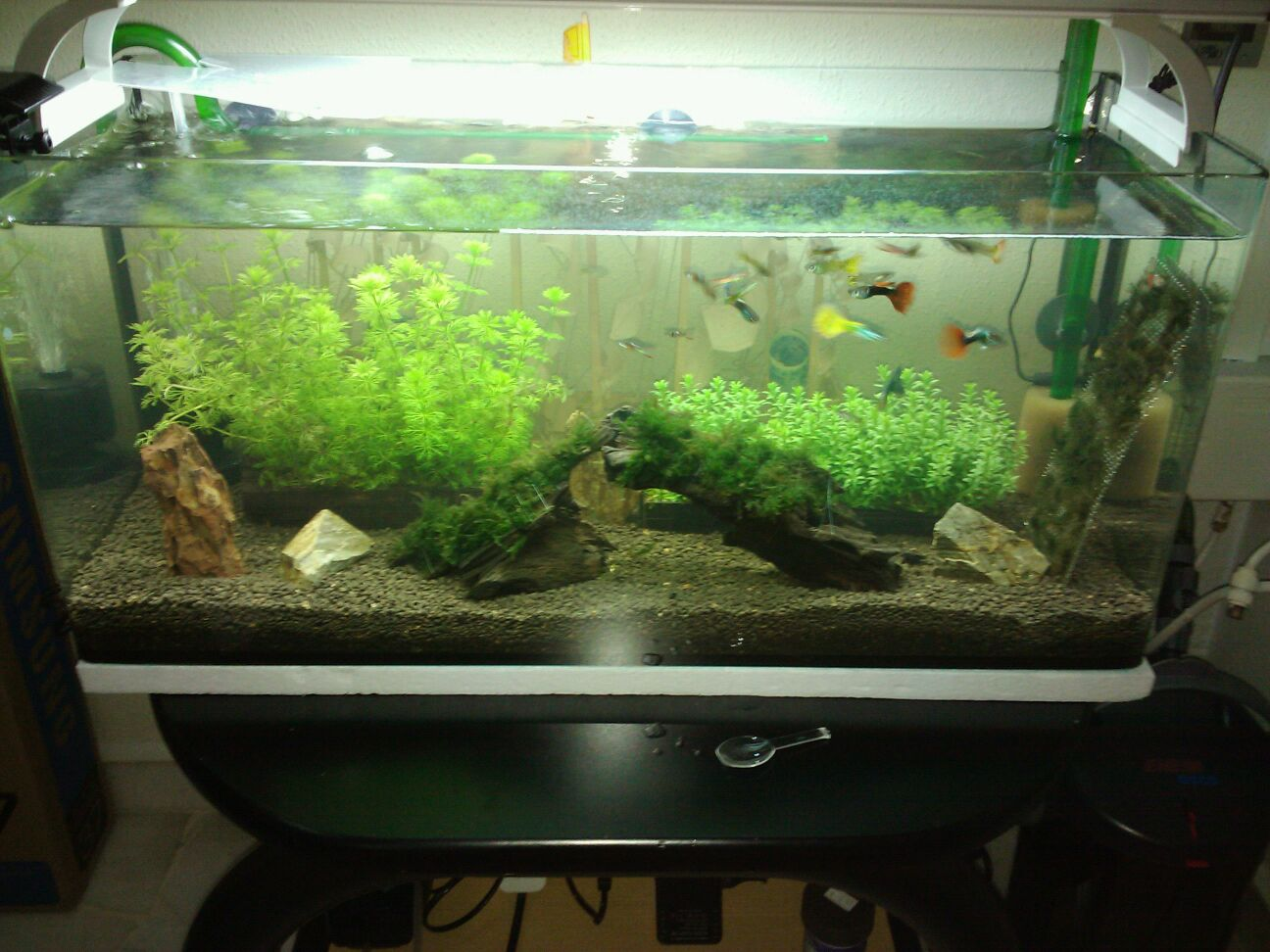 This blog is dedicated to my new  planted tank.