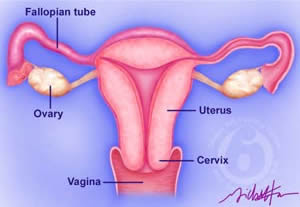 Siddha-Medical-Cure: FEMALE INFERTILITY AND SIDDHA SYSTEM OF