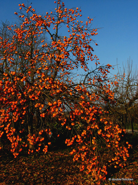 persimmon tree - naše drvo kakija