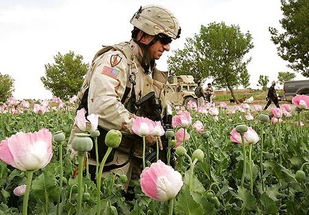 Bildergebnis für afghanistan soldaten mohnfeld