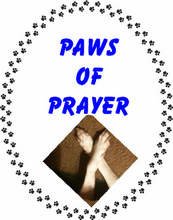 Paws of Prayer